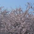 春はやっぱり 。。。  (*^^*)