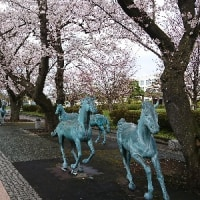 4月24日 青森県十和田市 自主練習
