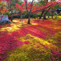 『想いでの紅葉』 金閣寺