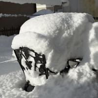 冷凍みかん と 雪害!
