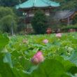 上野不忍池:終わり