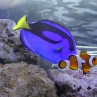 「その他の魚たち」/アクアパーク品川