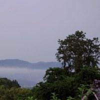 今朝の霧の舞う風景と野の花クララなど
