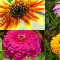 『雨散歩』 花々