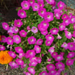 裏庭は夏の花