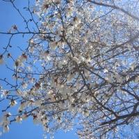 4/29(土)のPACニュース~暮らし&身近な法律・判例の情報