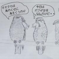 猛禽3兄弟♪