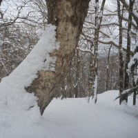 凡さんの山歩き 雪山気分 富士須山
