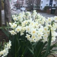 春をさがして