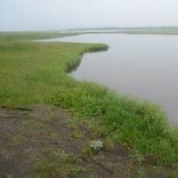 北海道野鳥旅・コムケ湖(6月24日)
