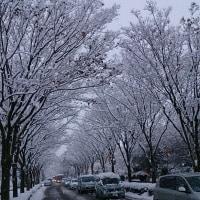 まだ、まだ降り続く雪、⛄、⛄