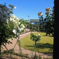 バラ公園2