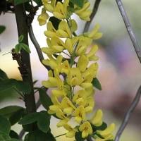 ブル-ボネットの花たち