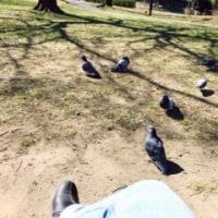 鳥種差別人間