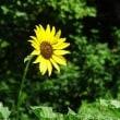 鶴見緑地の夏色の花