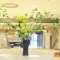 ・町田市民ホール・ロビー展示(ヤマゴボウ)