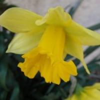 春を歩いて花を見つける