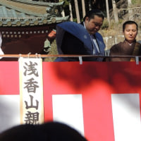 浅香山部屋を応援しています!!