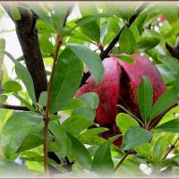 アートな果樹たち