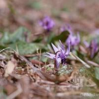「春の花」続々花開く