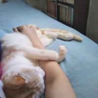 猫派の至福の瞬間て