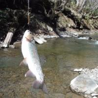5月4日 やっと釣りができた。  22