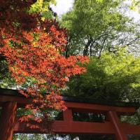 京都 鞍馬山界隈 20170624