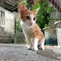 暑い沖縄の夜と猫たち 2016年6月 その5