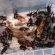 カブトムシの飼育箱