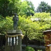 ハトの会にて小田原城紫陽花祭りに
