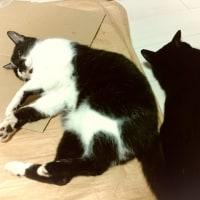 転がる猫2匹