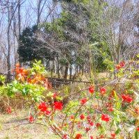彩の国嵐山町・・・「蝶の里公園」の散歩・・・早春の蝶・・・ミヤマセセリ・・・に遭いました