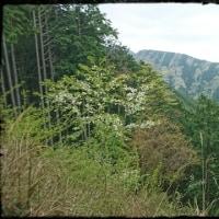 蛭ヶ岳、山行~不調のため、不本意ながら撤収したんだけど・・・・・