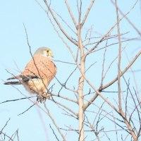 荒川野鳥調査・見たぞ・撮ったぞ・可愛いど~