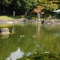 白鳥庭園をめざして・(2)