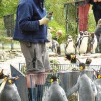 ペンギン飼育員さんのファッション・3・英国
