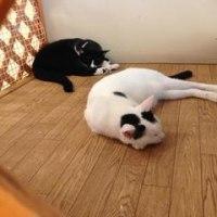 出身地は保護猫カフェ「ねこかつ」