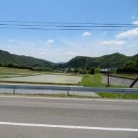 稲作(田植え終了)6月