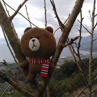隣町 日出町城山へムカゴ探しのハイキング