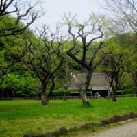 スケッチ散歩~藤沢新林公園
