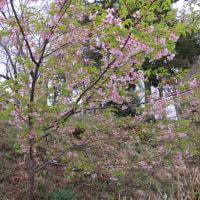 植物の漢字 桜