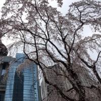 北口和沙ちゃん 3月26日ツイキャス (^^♪