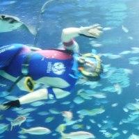 サンシャイン水族館の「水中パフォーマンス」
