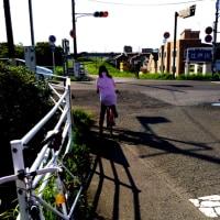 旧江戸川21km68分ポケモンGO5匹