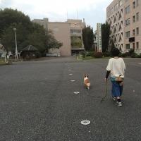 最近の散歩コース