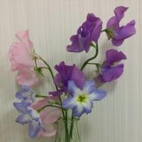 スイートピーとリューココリーネと菊