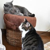 猫たちのブーム