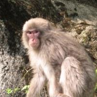 高原山の猿君!
