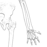 小指側と繋がる骨