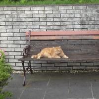 外猫の番猫